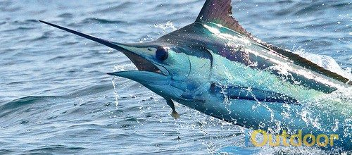 Where is the best place in florida to catch marlin for Best places to fish in florida without a boat