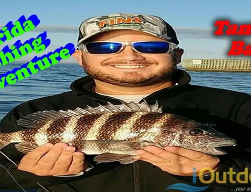 Florida Fishing Adventure For Sheepshead in Tampa Bay- iOutdoor